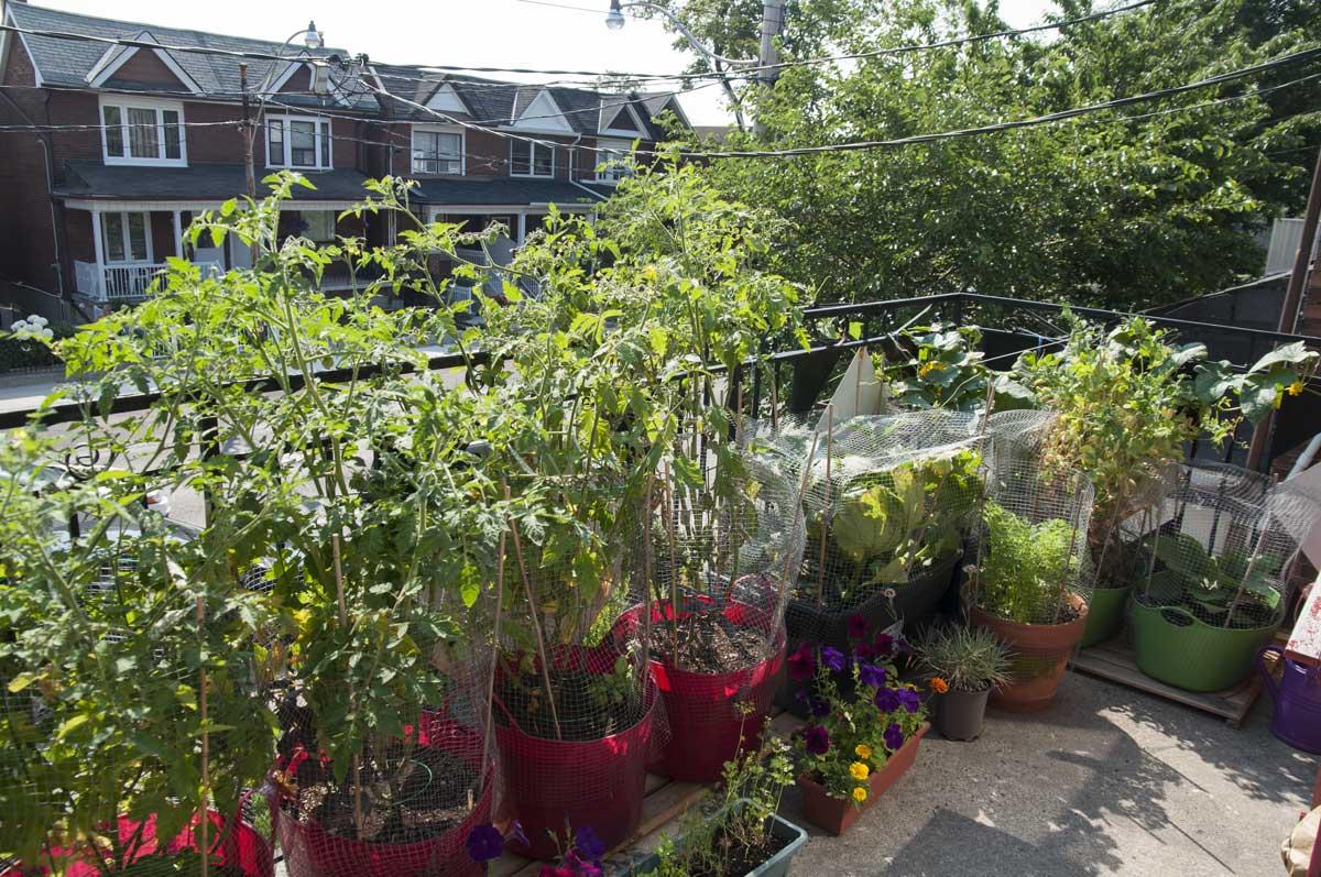 garden13july
