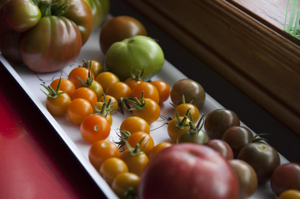 tomato-tray-sm