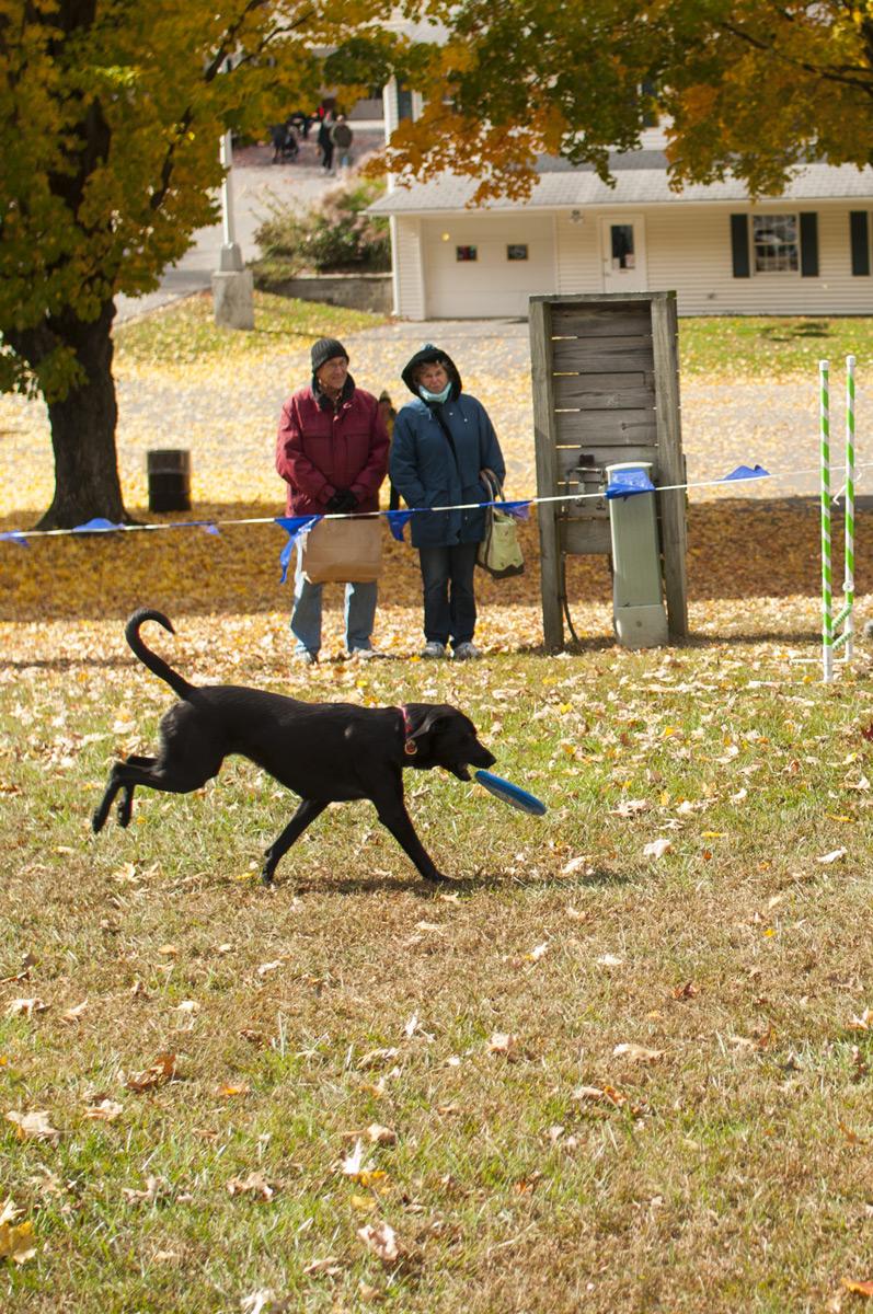 black-frisbee-dog-sm