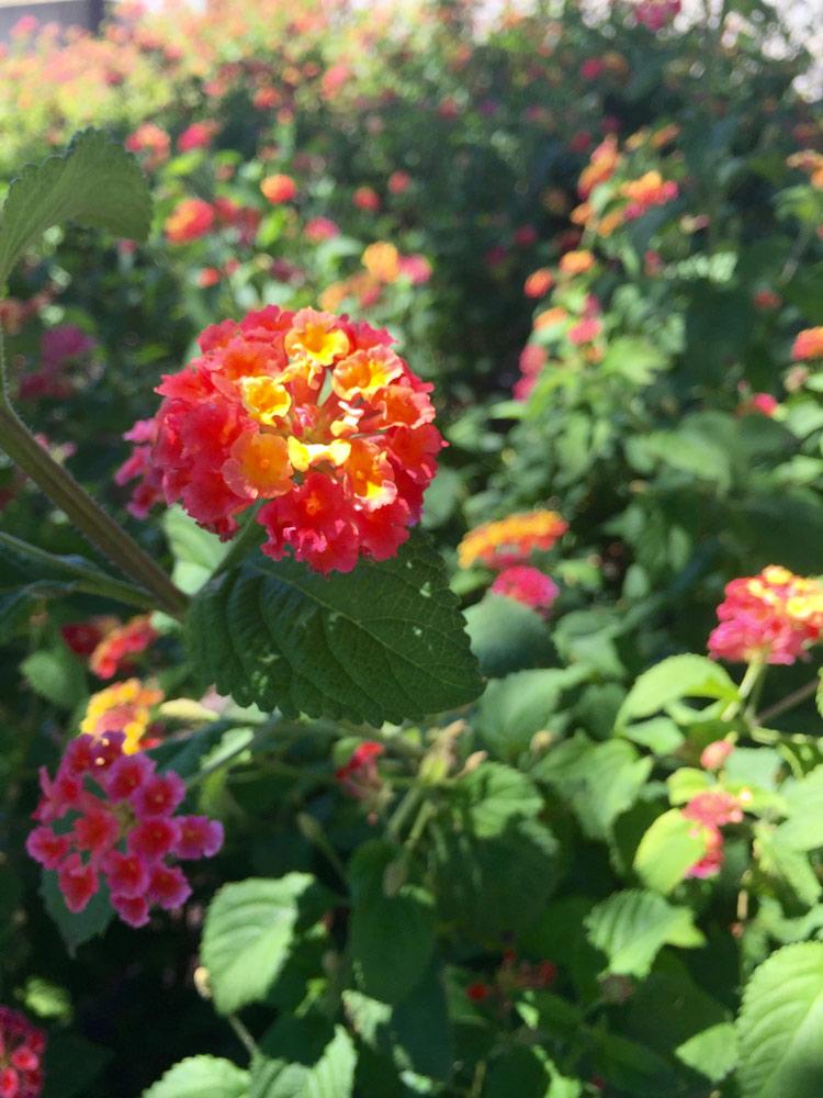 gradient-flowers-sm