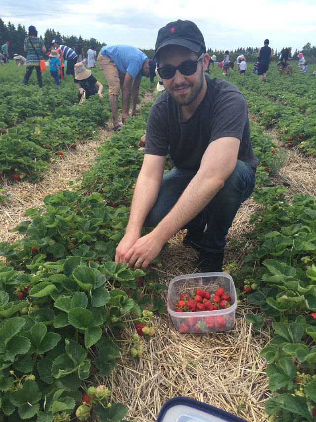 picking-strawberries